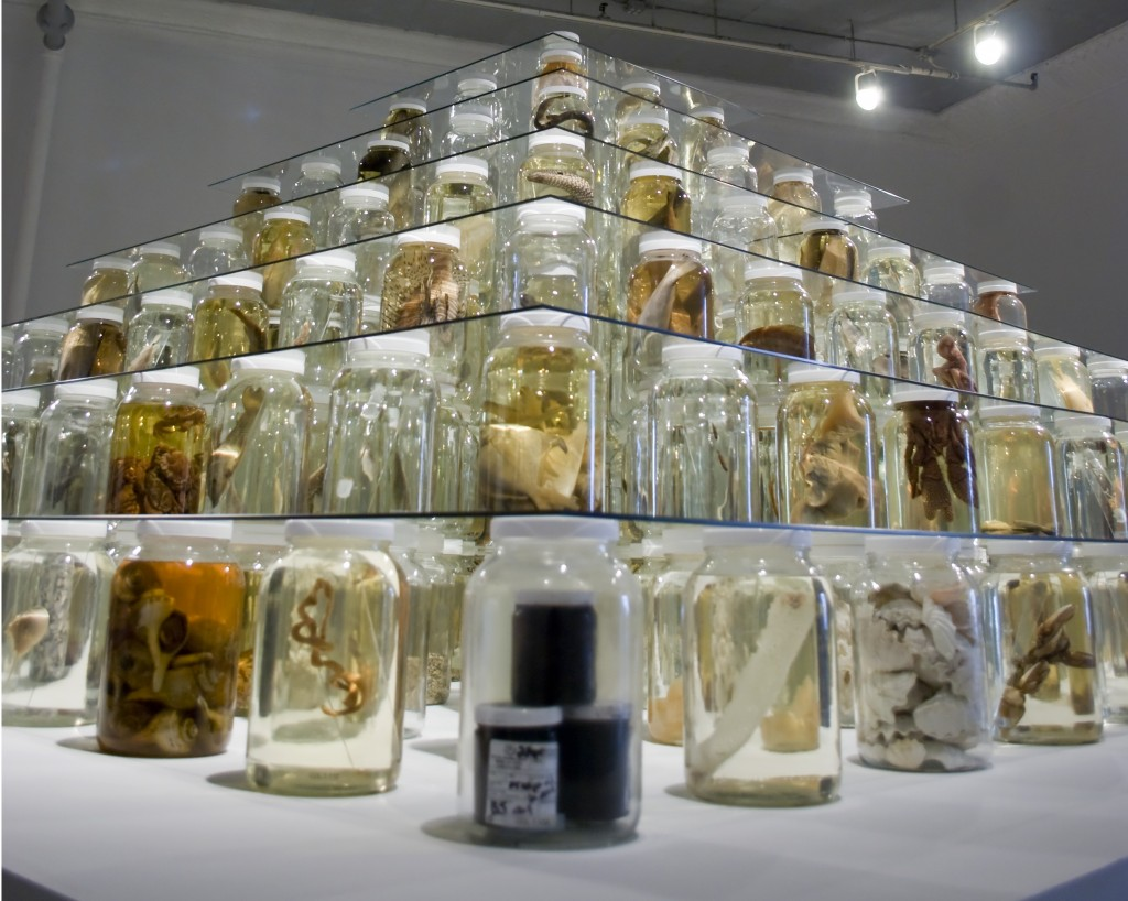 Brandon Ballengee with Todd Gardner, Jack Rudloe, Brian Schiering and Peter Warny, Collapse, 2012, mixed-media installation including 26,162 preserved specimens representing 370 species; glass, Preffer and Carosafe preservative solutions, 12 x 15 x 15 feet; Photo: Varvara Mikushkina, Courtesy of Ronald Feldman Fine Arts, New York