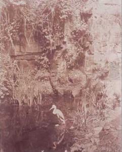 John Dillwyn Llewelyn, Piscator No. II, 1856