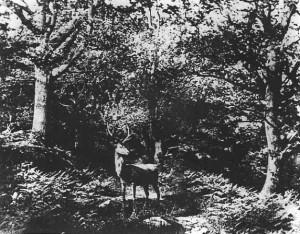John Dillwyn Llewelyn, Deer Parking, c. 185